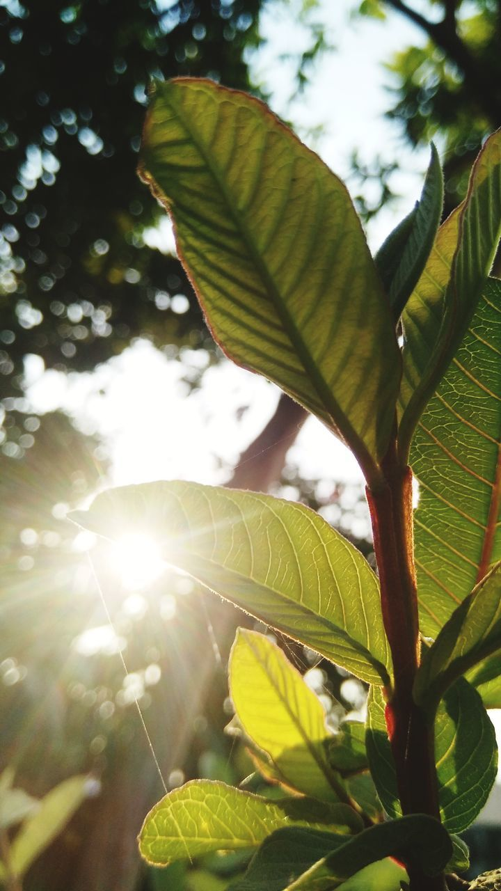 LOW ANGLE VIEW OF SUNLIGHT STREAMING THROUGH TREE LEAVES