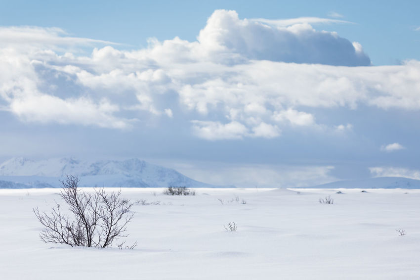 Snowcapped landscape with bare trees and bushes Moody Sky Arctic Bare Tree Beauty In Nature Blue Bush Cloud - Sky Cold Temperature Day Deep Snow Getting Away From It All Landscape Lofoten And Vesteral Islands Mountain Range Nature No People Outdoors Remote Sky Snow Solitude Tree Weather White Color Winter