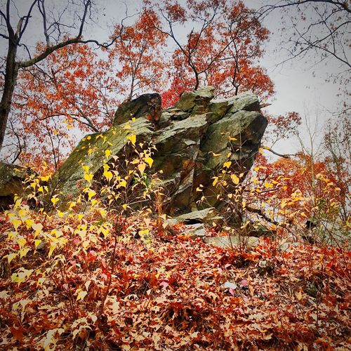 Beauty In Nature Outdoors Low Angle View Autumn Rock Formation No People
