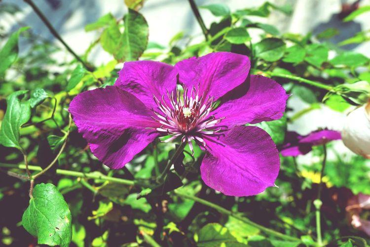 EyeEm Flower