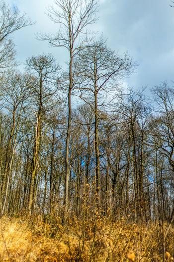 Forêt en