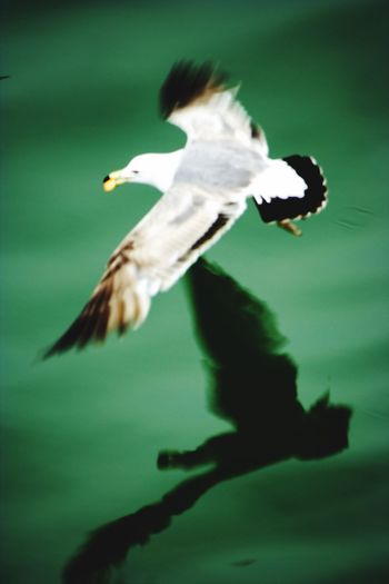 Animal Themes Bird Flying One Animal Animals In The Wild Motion Spread Wings Mid-air Blurred Motion Animal Wildlife Day Outdoors No People Nature Close-up I Want To Know Your Secret, C I Always Thinking About U, G Thank You,❤️ 감사합니다