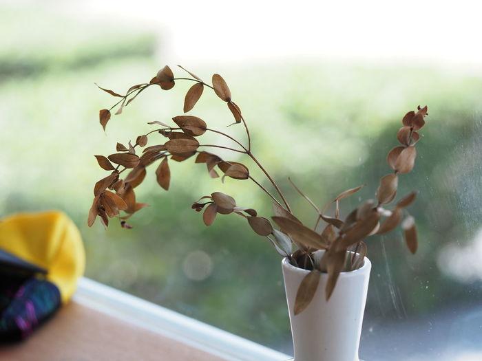 dry plant Plant