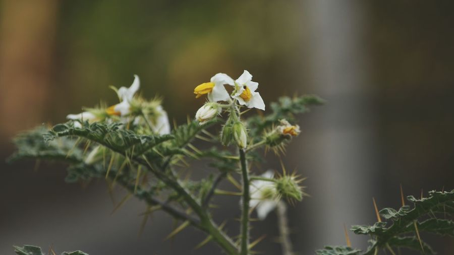 Flower Nature Close-up No People Fragility Outdoors Day Beauty In Nature Animal Themes Freshness