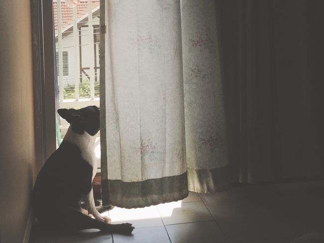 Dog Boston Terrier Alone Light And Shadow Holiday Sad City #bkk #bangkok #urban #view #art #place #building #thailand #asia