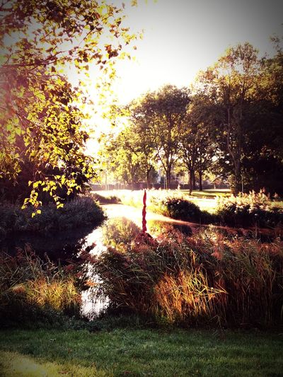 begin van de herfst Tree Water Sunlight Grass Calm