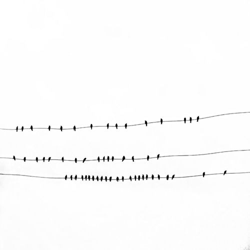 Lessismore Mininal The Minimals (less Edit Juxt Photography) The EyeEm Facebook Cover Challenge Getting Inspired Silhouette Nature Streetphotography Blackandwhite Rsa_mininal Birds Autumn Minimalism Getting Creative Monochrome Tiny People Mobilephotography Greece