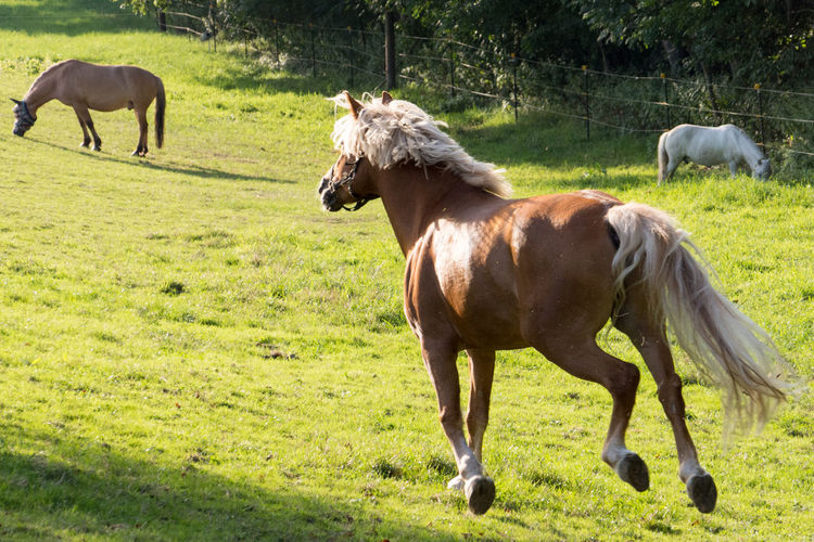 Pferd Animal Themes Animal Wildlife Horse Horsephotography Noporn Outdoors Wildlife