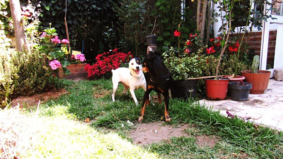 Dog Domestic Animals Pets Flower Mammal Doglover Foxterrier  Dog Plant Growth Real People Grass Outdoors Livestock Nature Day Freshness People