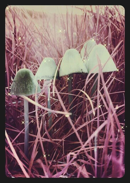 Leonie Filter Toadstools Magical Fungus Addict
