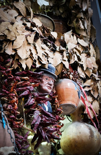 Totò in naples Adult Adults Only Autumn Christmas Day Napoli One Person Outdoors People Portrait Real People Shop Toto' Tree Young Adult EyeEmNewHere Live For The Story BYOPaper! The Great Outdoors - 2017 EyeEm Awards