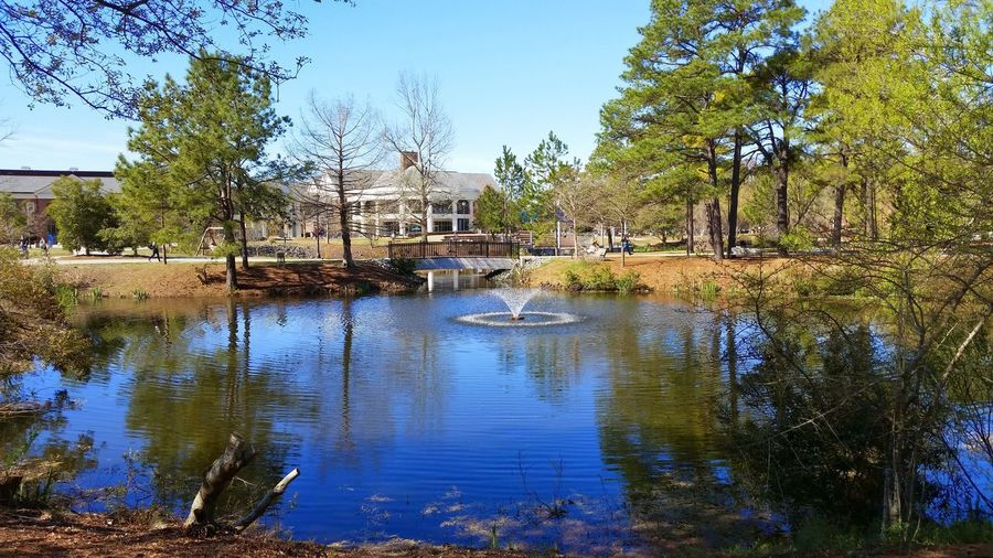 Collegecampus Uncw College Reflection Water Tree Outdoors Day Flood No People
