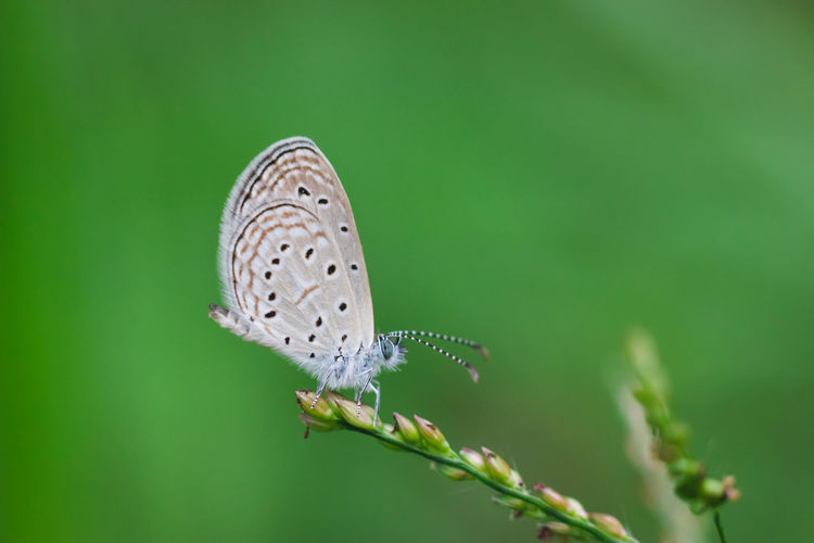 Animal Wildlife Animal Themes One Animal Animal Animals In The Wild Invertebrate Plant Beauty In Nature Nature Close-up Insect Animal Wing Butterfly - Insect Focus On Foreground No People Day Vulnerability  Flower Selective Focus Fragility Butterfly Outdoors Pollination