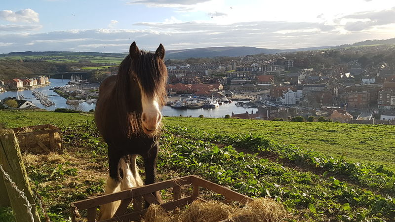 Scenics Grass Outdoors Sky Day Water Nature Beauty In Nature Cloud - Sky Whitby Whitby North Yorkshire Landscape Nature No People Green Animal One Animal Animals In The Wild Animal Wildlife Mammal Looking At Camera Close-up Grass Horse Horse Photography
