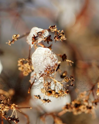 February 2016 Showcase February Macro Beauty Iced Ice Crystals Icedrops Icedwater Winter_collection Winter Bushes Nature Nature_collection Nature Photography Nature Lover February