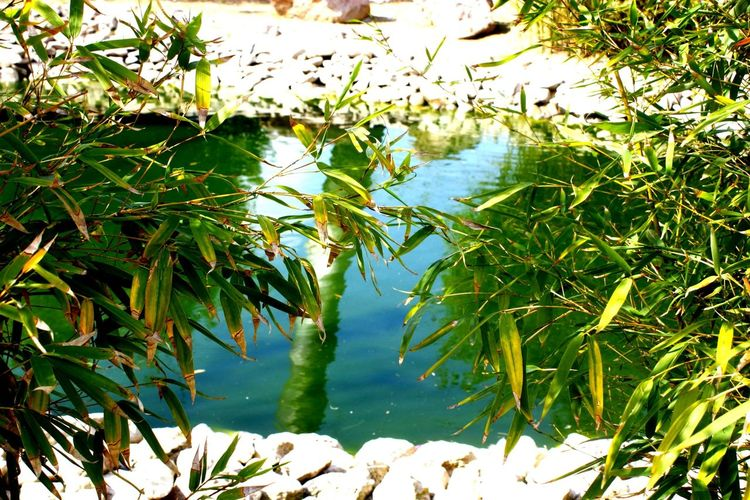 Botanic Green Natural Sasalı Doğal Yaşam Parkı çiğli Izmir Turkey Eye4photography  EyeEm Best Edits