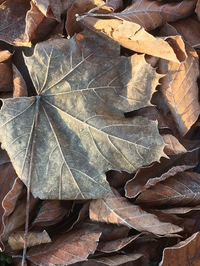 High angle view of dried leaves