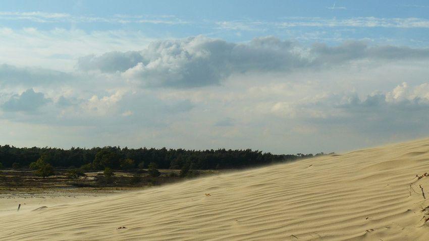 Sand Dune Tree Beach Sand Water Agriculture Sea Sky Landscape Cloud - Sky