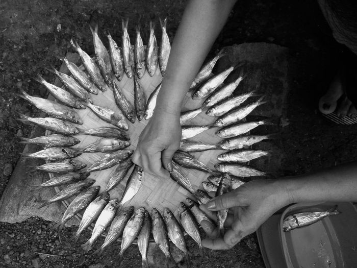 Cropped Hands Arranging Dead Fish On Container For Sale At Market