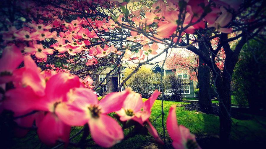 Love... Spring
