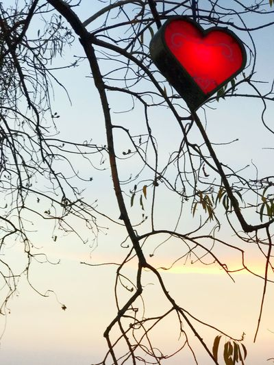 Low Angle View Red Sky Heart Shape Tree Bare Tree No People Branch Outdoors Day Nature On The Road Road Hello World Enjoying Life ♥ Cloud - Sky Clear Sky Gratitude Happiness Life Is Perfect Tree Hanging Heartbeat Moments Heart ❤ Heart