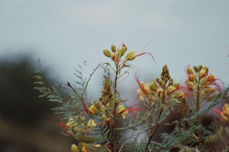 The Mix Up EyeEm Best Shots EyeEm Nature Lover Nikon Plant