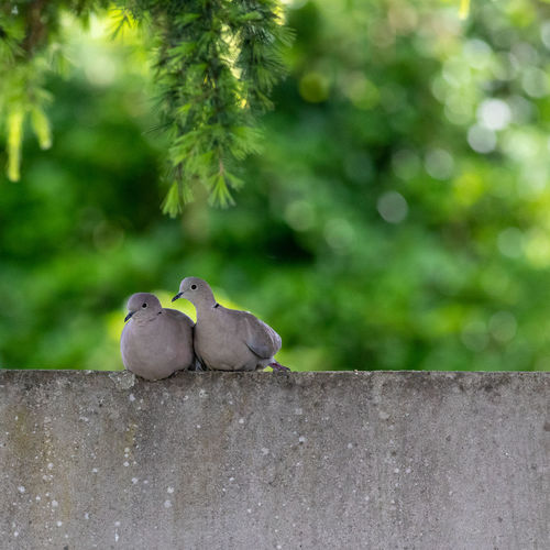 Close-up of birds perching on retaining wall