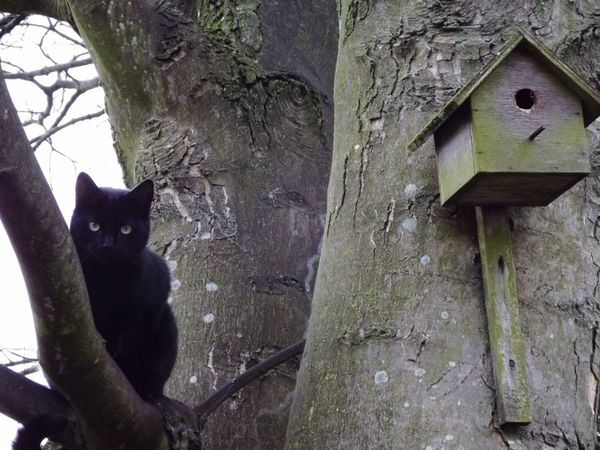 This is my neighbours cat, he hangs out at my house when he's not in the tree :) Hanging Out Cute Cats Naughty Cat Tree