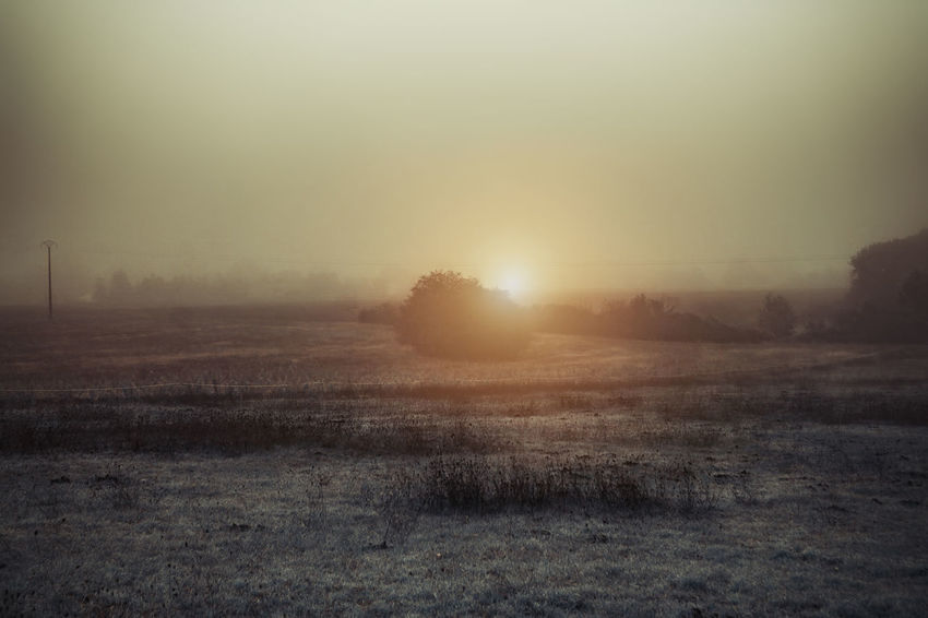 Tranquility Sky Fog Landscape Environment Tranquil Scene Beauty In Nature Nature Plant Land Tree No People Field Sun Scenics - Nature Non-urban Scene Winter Twilight Outdoors Hazy