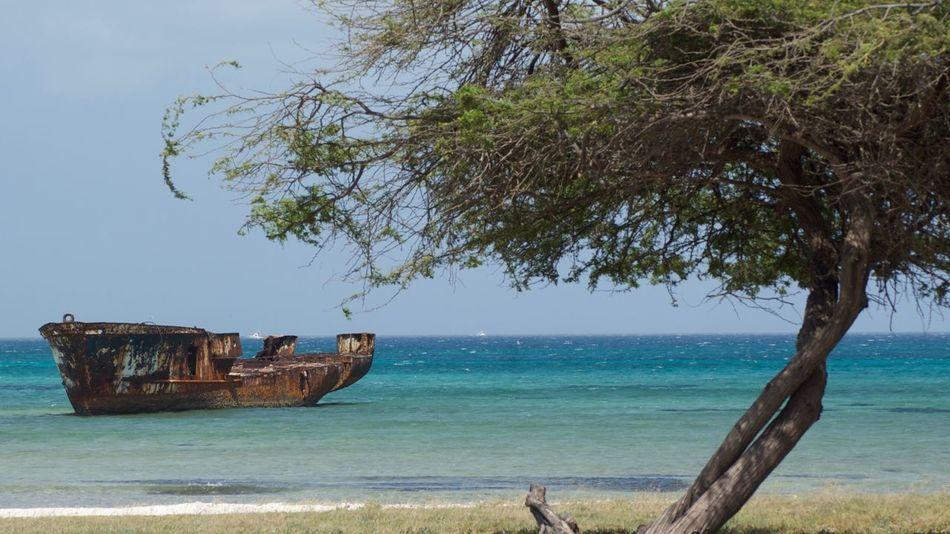Sea Tree Water Beach Nautical Vessel Damaged Nature Abandoned Day Sky Beauty In Nature Scenics Horizon Over Water Outdoors No People Shipwreck Aruba