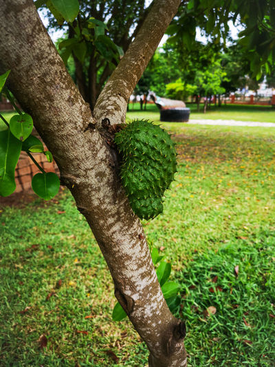 Lizard on tree trunk in park
