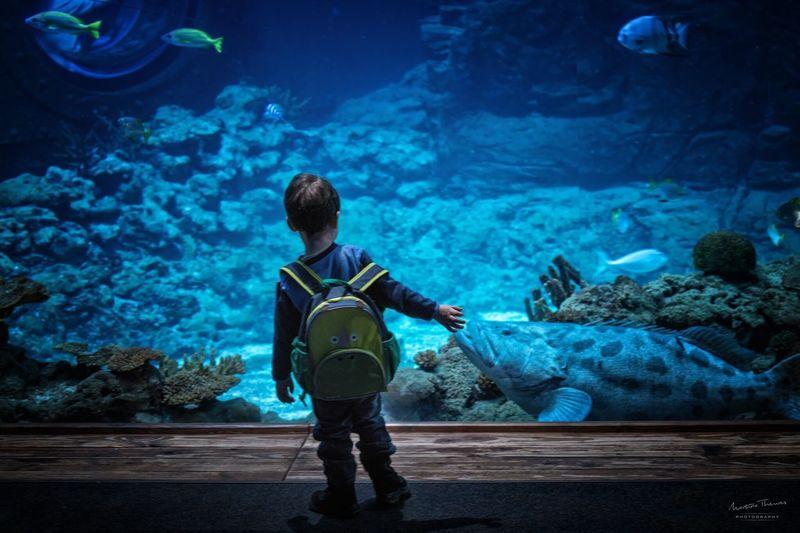 Rear view of boy looking at aquarium