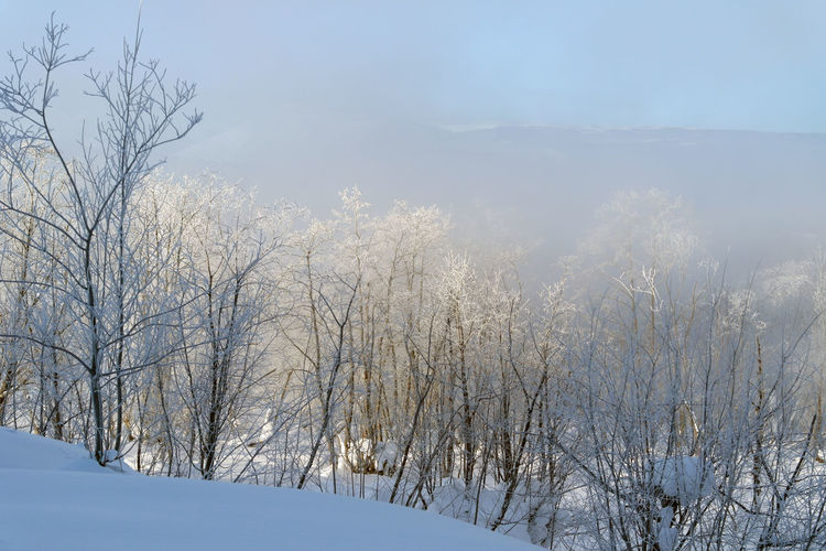 Misty morning two Beauty In Nature Cold Temperature Day Freshness Frozen Mist Nature No People Outdoors Scenics Sky Snow Sunlight Tranquility Tree Winter