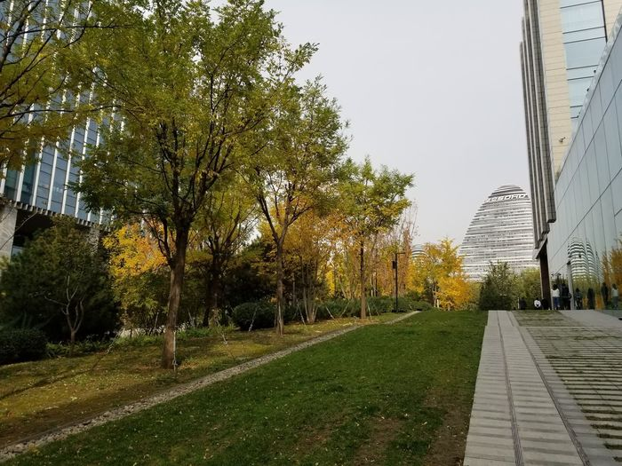 Footpath amidst trees in park against sky