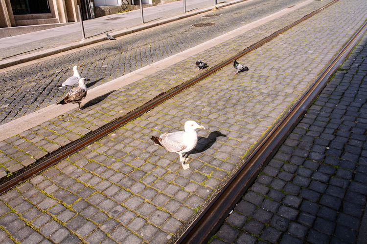 High angle view of seagulls perching on footpath