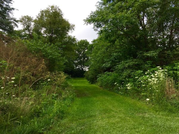Green Grassy Lane Beauty In Nature Day Field Grass Grassy Green Green Color Growing Growth Idyllic Landscape Lush Foliage Nature No People Non Urban Scene Non-urban Scene Outdoors Plant Remote Scenics Sky The Way Forward Tranquil Scene Tranquility Tree