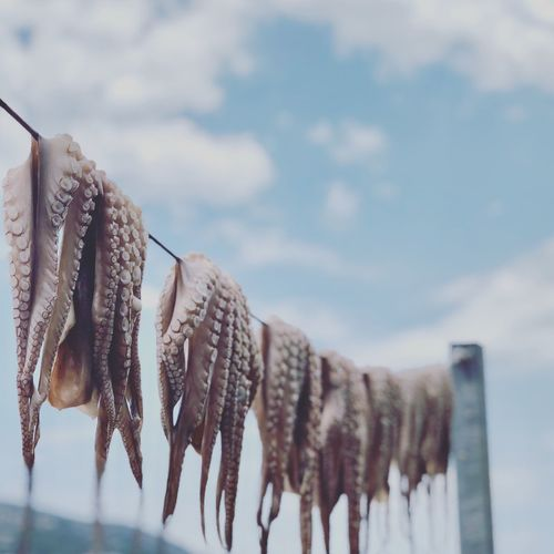 Low Angle View Of Octopus Drying On String Against Sky