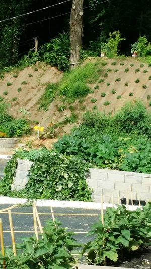 Secret Garden City Gardens Flowers,Plants & Garden Japanese Garden Taking Photos Relaxing Enjoying Life Relaxing