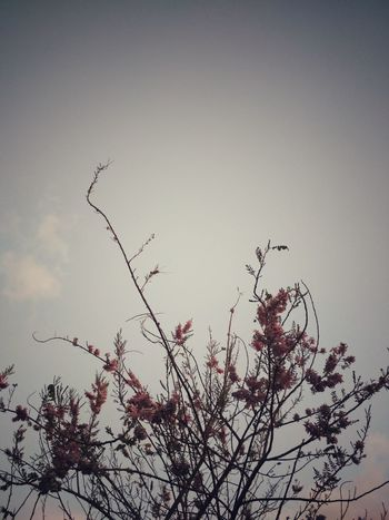 Beauty In Nature Tree And Sky Tree Branches Pink Leafs Beauty In Nature Nature Branch No People Tree Outdoors LearningPhotography Nature_collection EyeEm Nature Lover Plant Part Nature Photography
