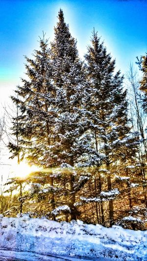 Showcase: February Very Cold Morning -38 C Outdoors Photograpghy  Beautiful Nature Trees Enjoying Life Taking Photos Smartphonephotography