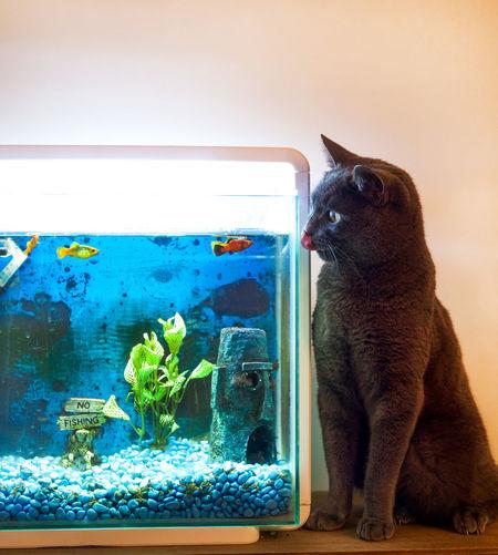 Close-Up Of Cat Looking At Aquarium