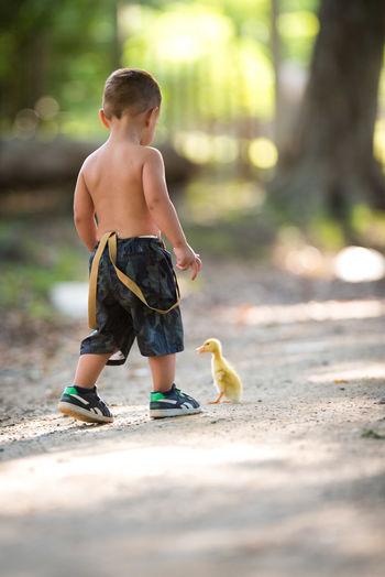 Campo Duck Mascota