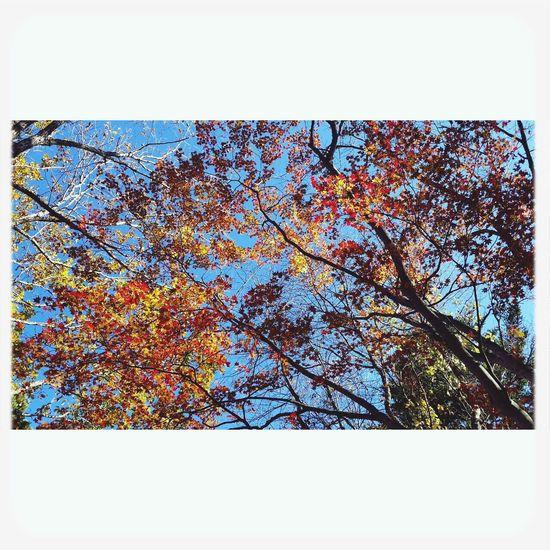 紅葉 戸隠 Autumn Nature