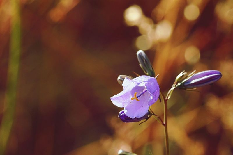 Violett Space