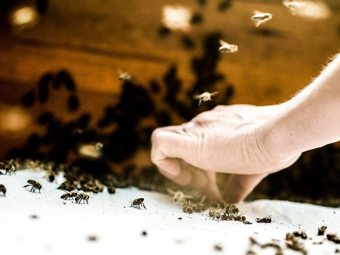 Close-up of hand holding insect on table