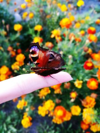 Butterfly💓 EyeEm Nature Lover EyeEm Outdoors Color Explosion Colors Flowers Nature Photography Nature Peace Butterfly