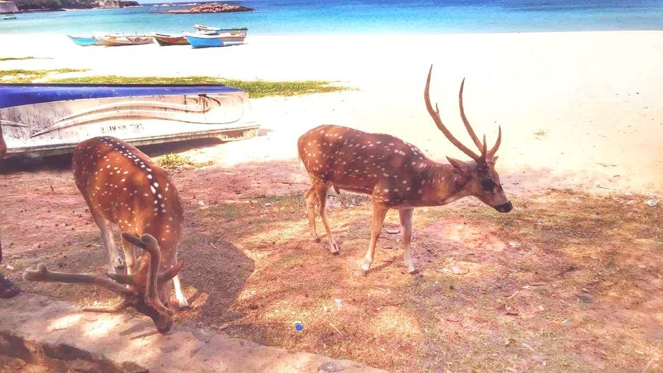 dear Widelife Two Animals Hiding Water Animal Themes Deer