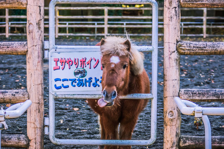 Animal Themes Close-up Day Domestic Animals Horse Livestock Mammal Nature No People One Animal Outdoors Standing そこの旦那!へへっ おかわり
