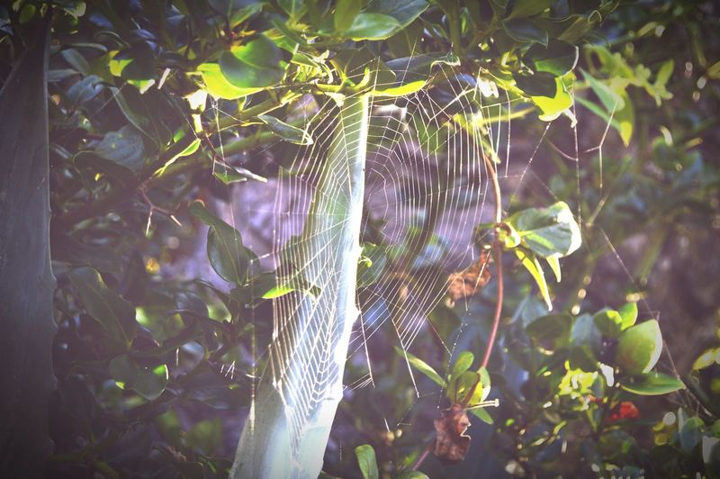 Victoria Beach Spiderweb Nature Photography Urbanphotography Nikon D3200 Natureporn Eyeemphotography Deceptively Simple
