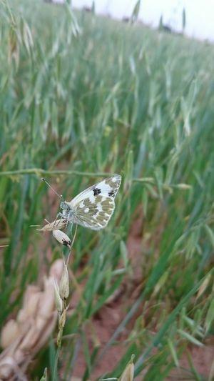 Butterfly Desert Beauty First Eyeem Photo Adrar